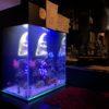 多摩市 飲食店 w350海水魚水槽 – TOJOMEDIA
